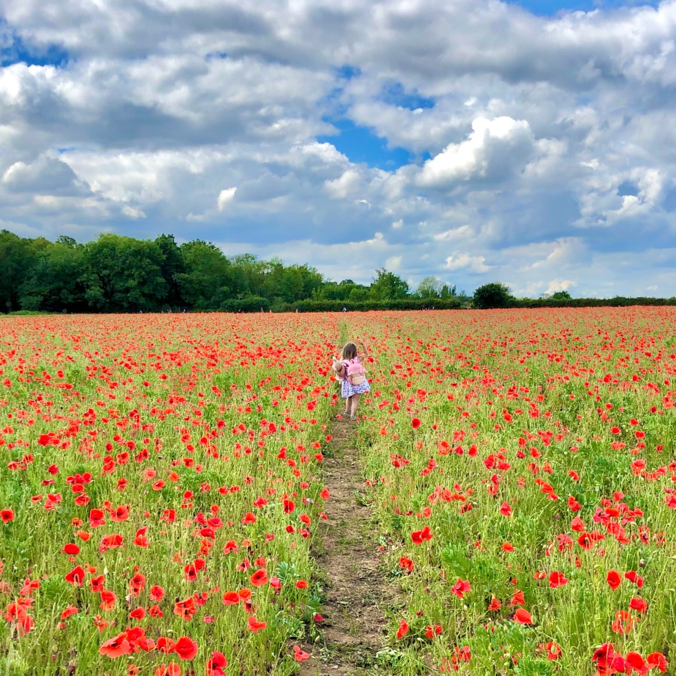 Little girl walking in Hertfordshire Poppy Field
